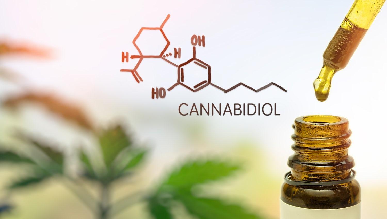 cbd oil ganja black close natural pot health medicative grow leaf variety hemp nature macro dope herb t20 Qzjojm