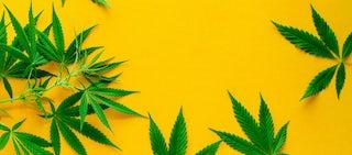 weed hero 0